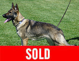 AKC registered trained personal protection german shepherd dog for sale